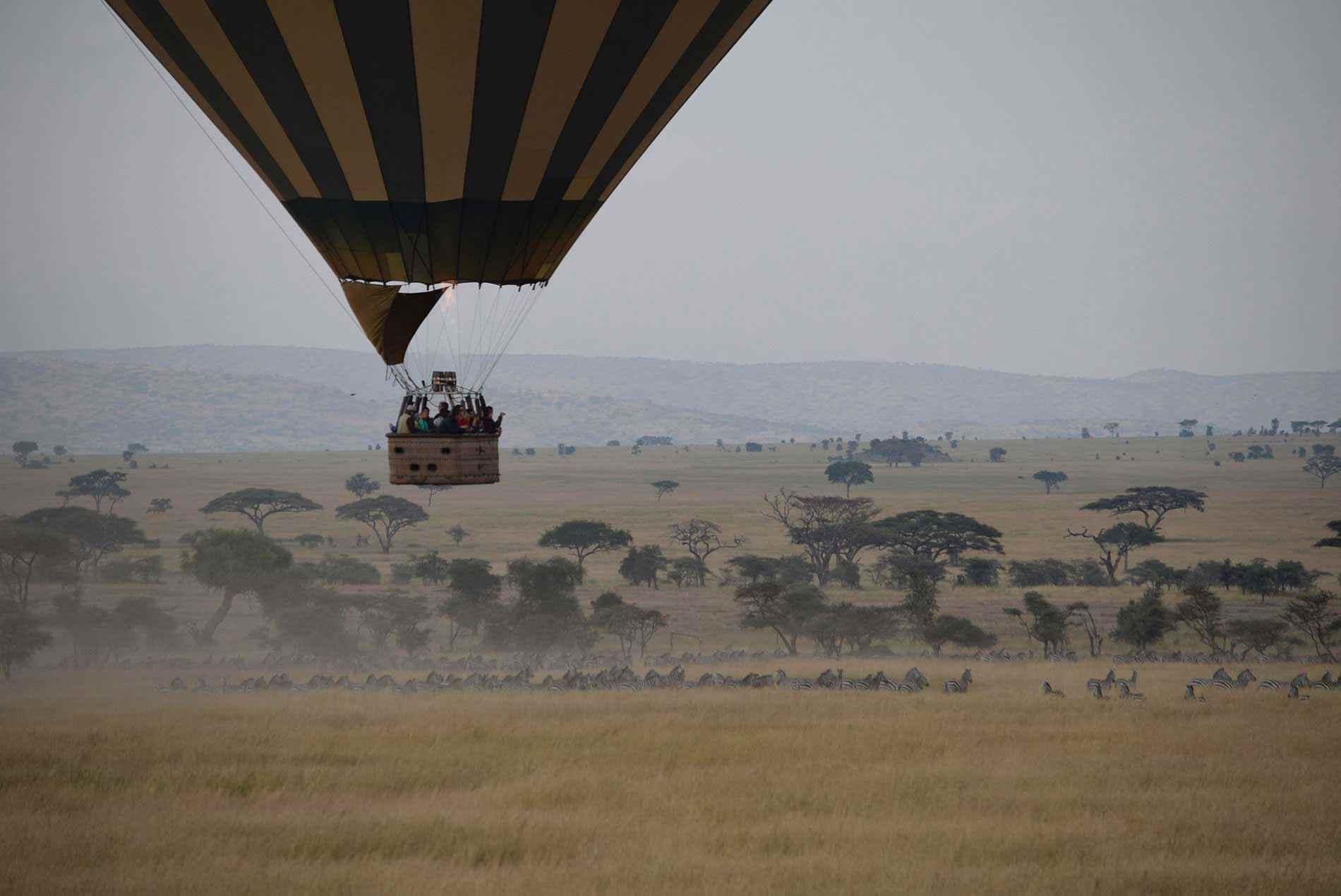 Quelles sont les meilleures choses à faire à Serengeti?