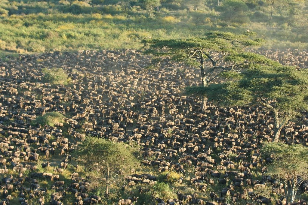 The game viewing from our balloons in Serengeti South has been absolutely breathtaking!