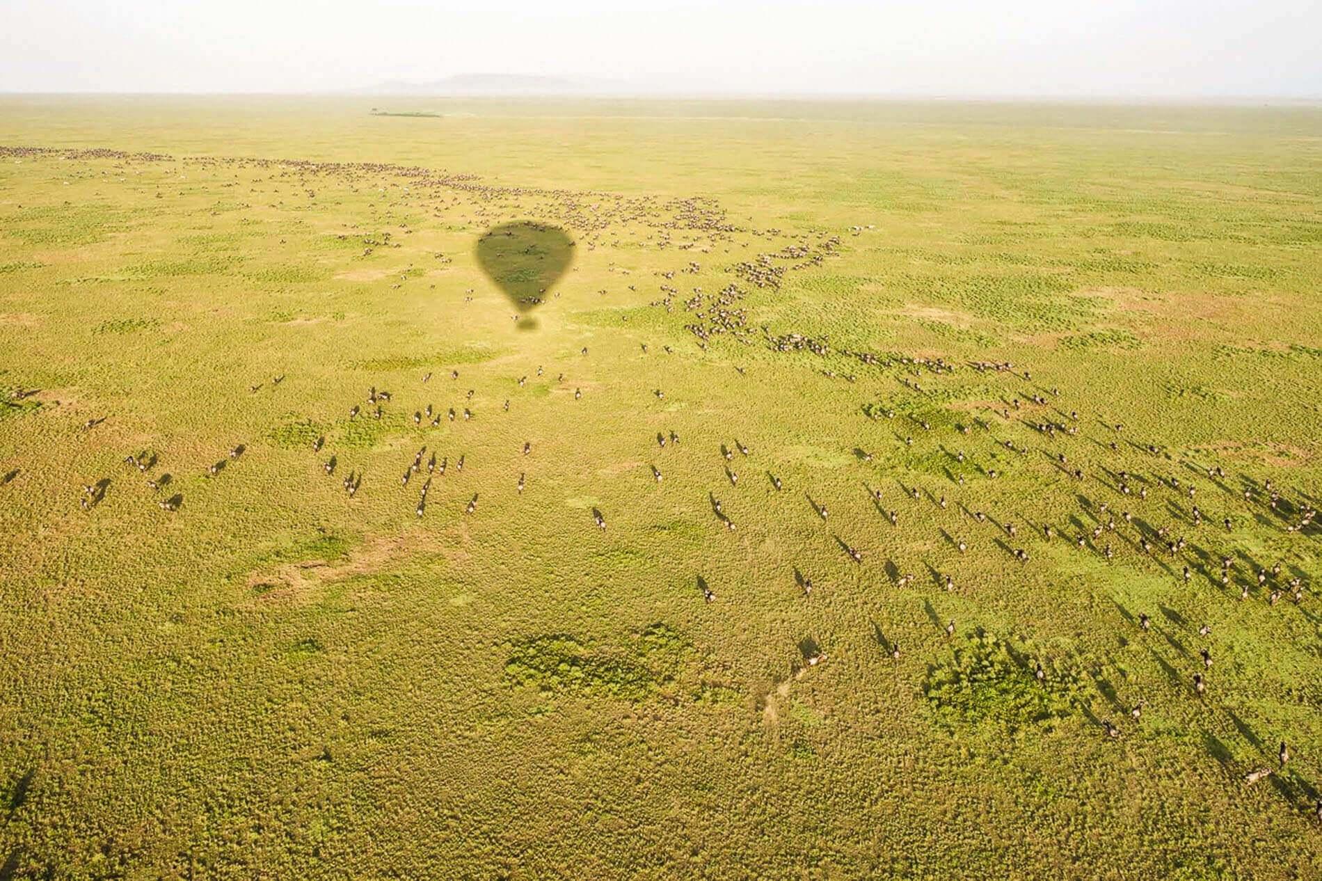 The Great Migration of Wildebeest